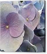 Soft Hydrangea  Canvas Print