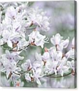 Soft Lavender Dancing Azalea Flowers Canvas Print