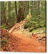 Soft Light Along The Cheakamus Lake Trail Canvas Print