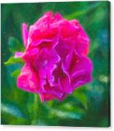 Soft Pink Peony Canvas Print