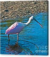 Soft Pink Spoonbill Canvas Print