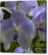 Soft Purple Orchids Canvas Print