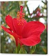 Soft Red Hibiscus With A Natural Garden Background Canvas Print