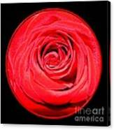 Soft Red Rose Closeup Canvas Print