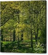 Soft Spring Light Canvas Print