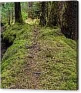 Soft Trail Canvas Print