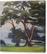 Soft Trees Canvas Print