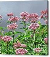 Softest Pink Canvas Print