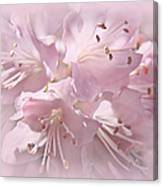 Softness Of Pink Pastel Azalea Flowers Canvas Print