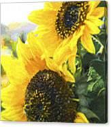 Solar Sunflowers Canvas Print