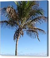 Sole Palm Canvas Print