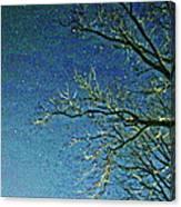 Solemn Sky Canvas Print