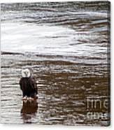 Solitary Eagle Canvas Print