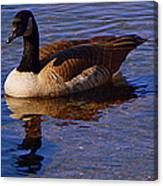 Solitary Goose Canvas Print