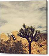 Solitary Man Canvas Print
