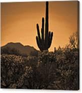 Solitary Saguaro Canvas Print