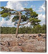 Solitary Tree Amidst Field Of Boulders Canvas Print