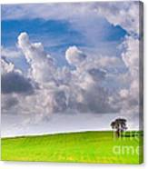 Solitary Trees Canvas Print