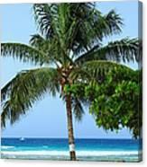 Solo Palm Canvas Print