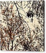 Soltice Di Amore Canvas Print