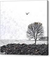 Somber Flight Wc Canvas Print