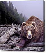 Some Days You Eat The Bear Some Days The Bear Eats You Canvas Print