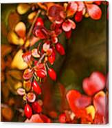 Some Red Berries II Canvas Print
