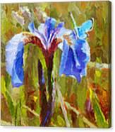 Alaskan Wild Iris And Blue Butterfly Flower Painting Canvas Print