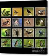 Song Birds Of Canada Collection Canvas Print