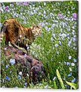 Sonoma In The Wildflowers Canvas Print