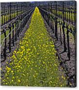 Sonoma Mustard Grass Canvas Print