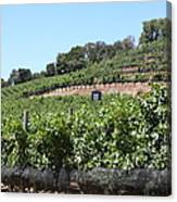 Sonoma Vineyards In The Sonoma California Wine Country 5d24503 Canvas Print