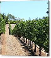 Sonoma Vineyards In The Sonoma California Wine Country 5d24507 Canvas Print