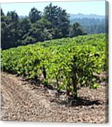 Sonoma Vineyards In The Sonoma California Wine Country 5d24512 Canvas Print