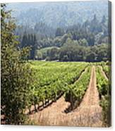 Sonoma Vineyards In The Sonoma California Wine Country 5d24515 Square Canvas Print