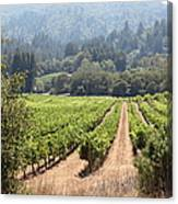 Sonoma Vineyards In The Sonoma California Wine Country 5d24515 Canvas Print