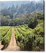Sonoma Vineyards In The Sonoma California Wine Country 5d24518 Canvas Print