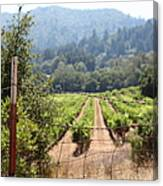 Sonoma Vineyards In The Sonoma California Wine Country 5d24521 Canvas Print