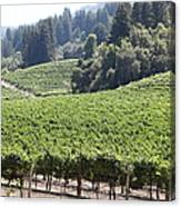 Sonoma Vineyards In The Sonoma California Wine Country 5d24539 Canvas Print