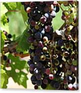 Sonoma Vineyards In The Sonoma California Wine Country 5d24572 Vertical Canvas Print
