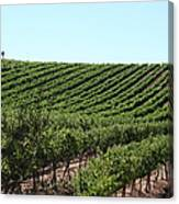 Sonoma Vineyards In The Sonoma California Wine Country 5d24588 Canvas Print