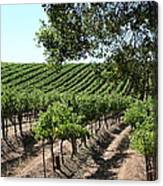 Sonoma Vineyards In The Sonoma California Wine Country 5d24594 Canvas Print