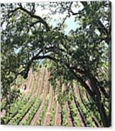 Sonoma Vineyards In The Sonoma California Wine Country 5d24619 Vertical Canvas Print