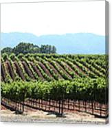Sonoma Vineyards In The Sonoma California Wine Country 5d24625 Canvas Print