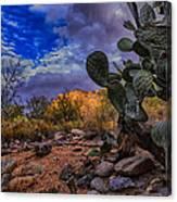 Sonoran Desert 54 Canvas Print