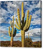 Sonoran Desert Beauty Canvas Print
