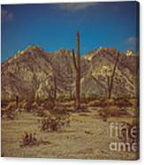 Sonoran Desert Canvas Print