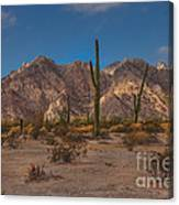 Sonoran  Canvas Print