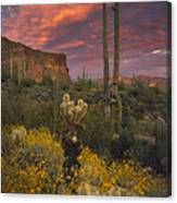 Sonoran Romance Canvas Print