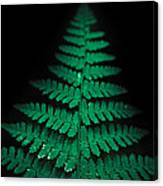 Soothing Fern Canvas Print